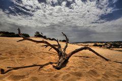 il deserto in vacanza