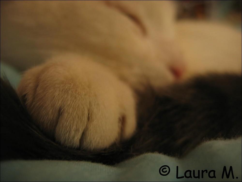 Il dort le miaou ...