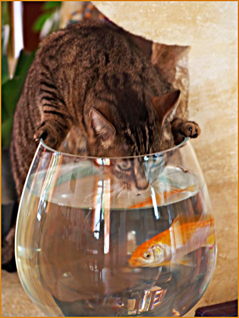 …il est mal, là, le poisson rouge… !