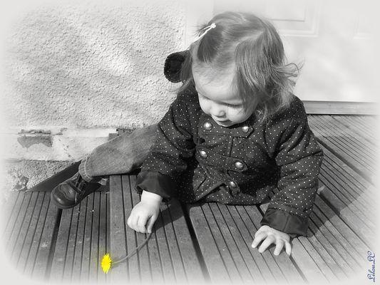 Il était une fois une petite fleur jaune