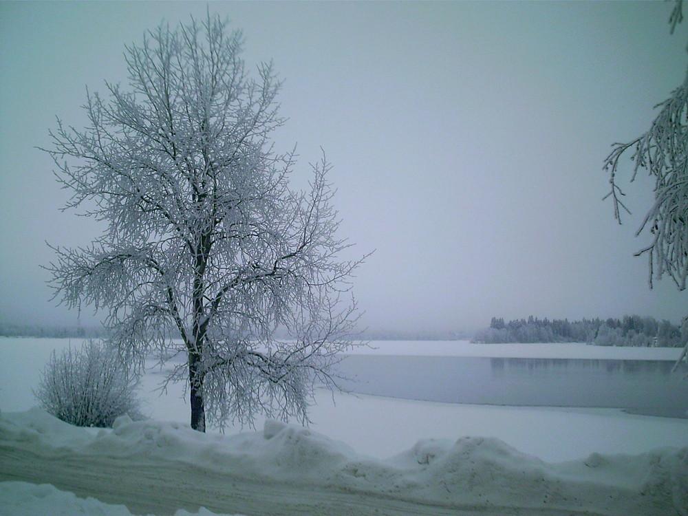 il fait très froid au cercle polaire! même les arbres on froids