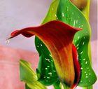 il fiore che piange