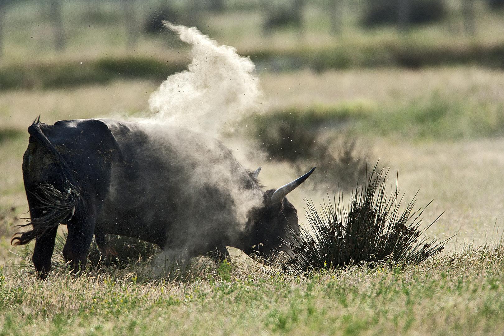 IL fume de l'herbe