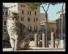 Il Gatti di Roma II - Dezember 2006