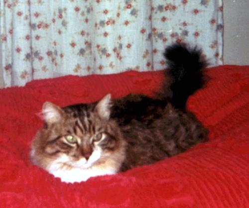 """Il gatto """"Cicio"""" - El gato """"Cicio"""" - Le chat """"Cicio"""" - The cat """"Cicio"""""""