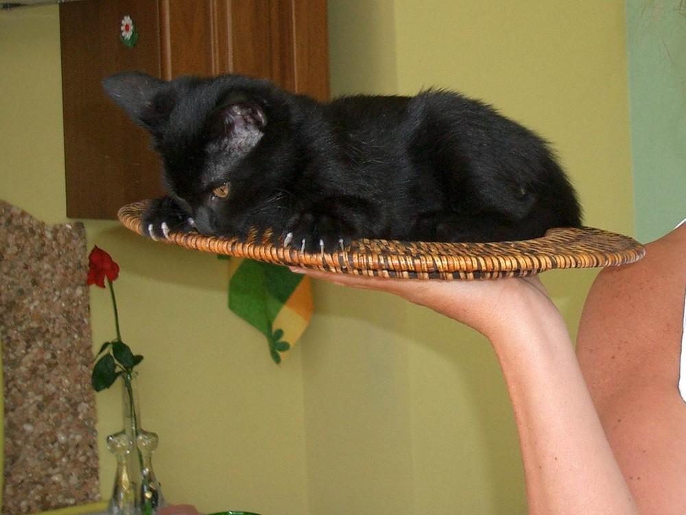 Il gatto è servito!