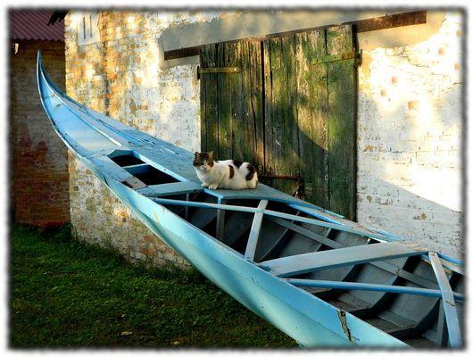 Il gatto gondoliere