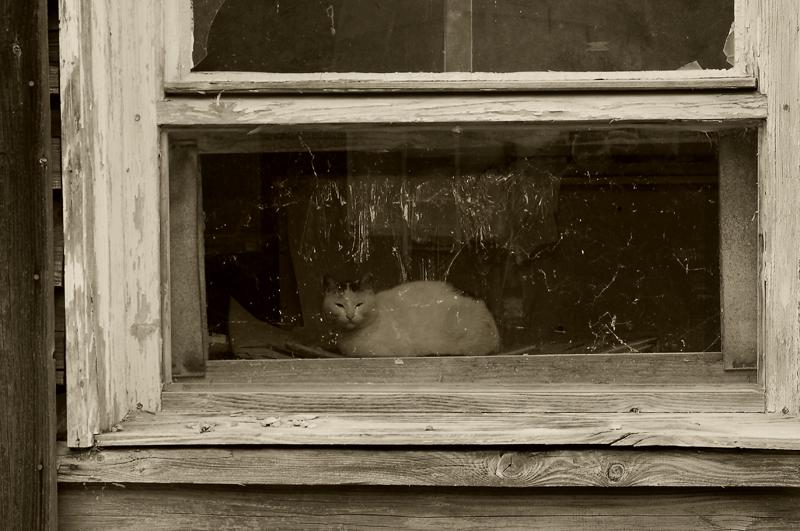 il gatto non si è accorto di me...:-)