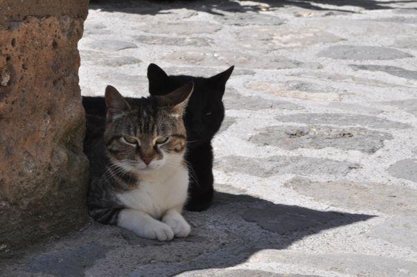 il gatto ombra