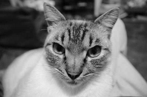 Il gatto Rico