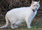 Il gatto strabico