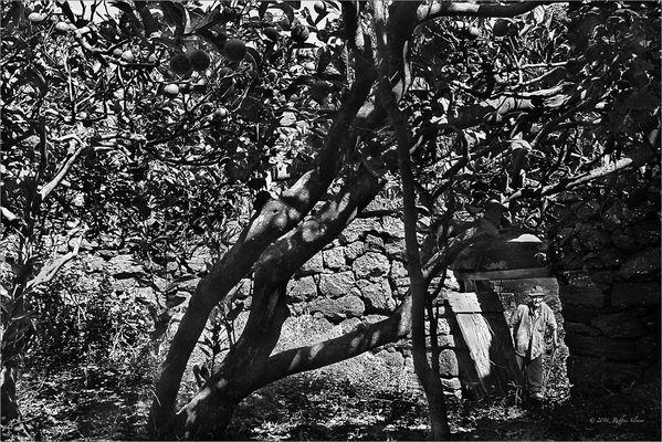 Il giardino arabo ........!!