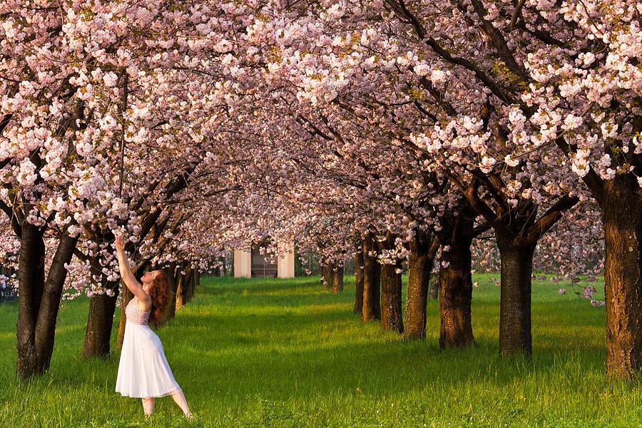 Il giardino dei ciliegi the cherry orchard foto immagini paesaggi campagna natura foto su - Il giardino dei ciliegi ...