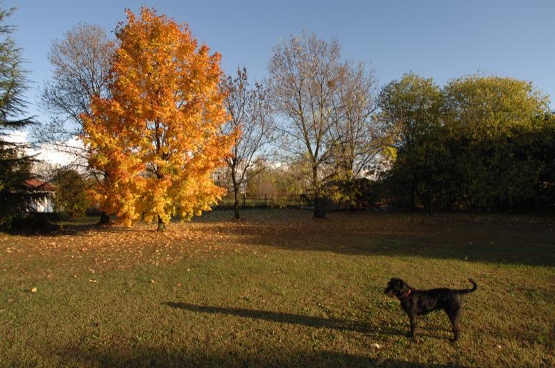 il giardino della casa del mio cane