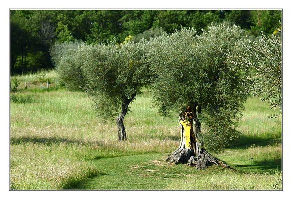 Il giardino di Daniel Spoerri 2