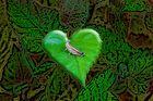 il grillo innamorato due revelescion