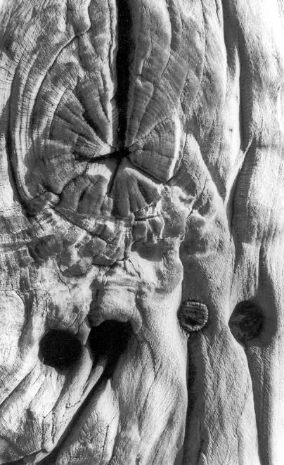 Il legno, il mare... l'uomo