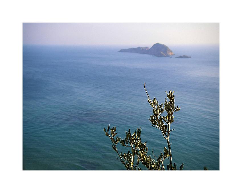 Il mare e la ramo d'olivo