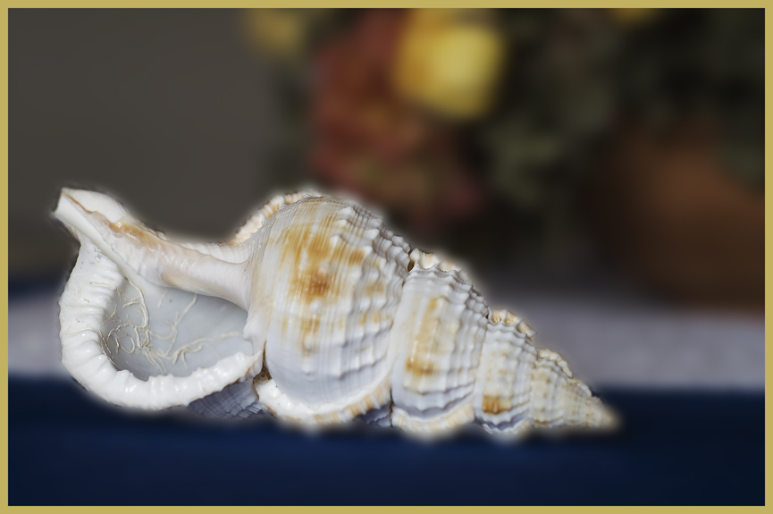 Il mare in......tavola