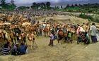 il mercato dei dromedari