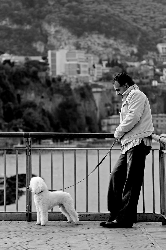 Il migliore amico dell'uomo...