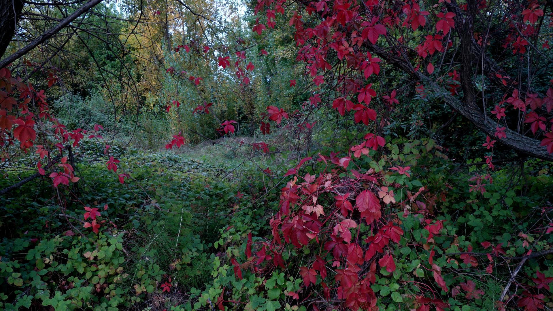 Il mio autunno