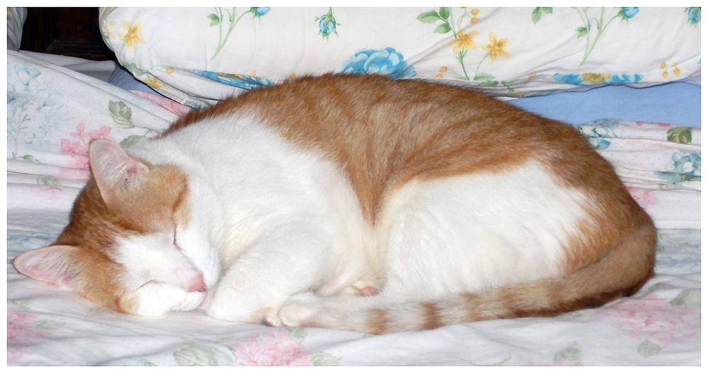 Il mio Rudy.....sogna