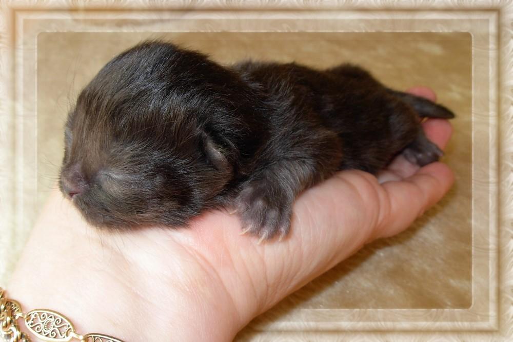"""""""Il mondo nel palmo della mano"""".Fra qualche mesetto saro una gatta....Anastasia..."""