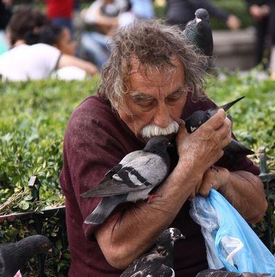 il murmure à l'oreille des pigeons