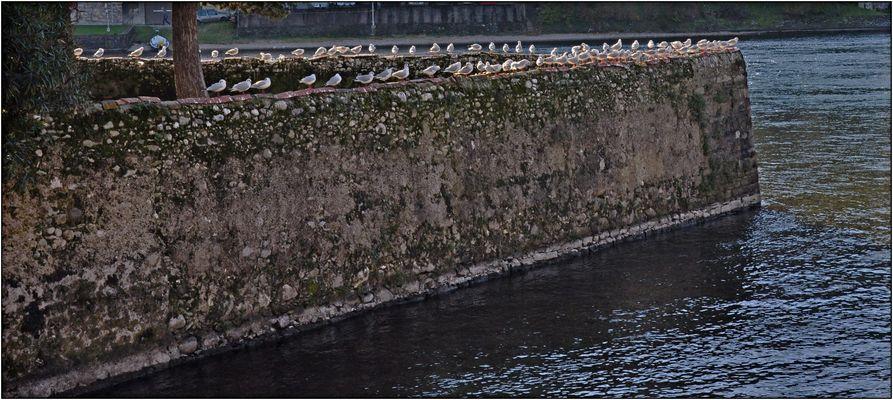 Il muro dei gabbiani...