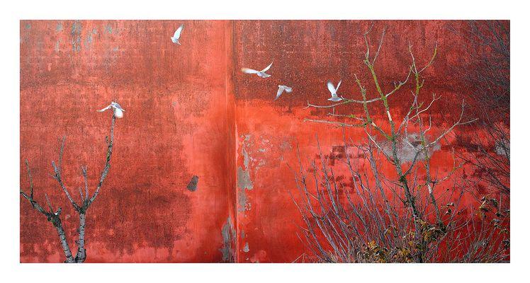 il muro rosso (bianchi fiori di vento)