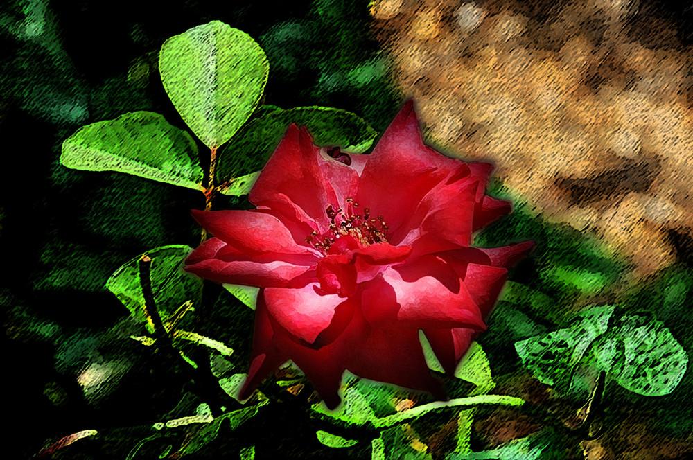 il nome di quella rosa