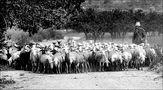 Il pastore e le sue pecore di Chantal Togni