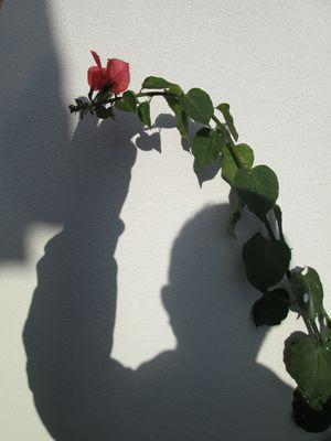 Il pensiero e il fiore.