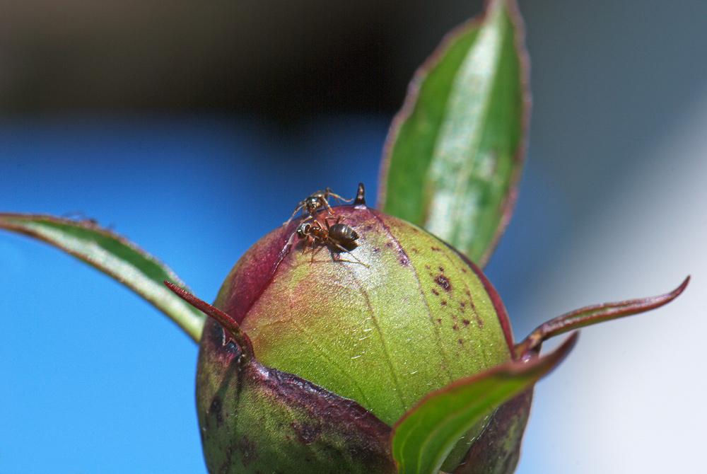 il pianeta delle formiche