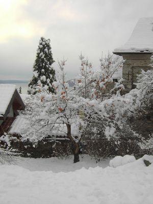 il più bello albero di Natale
