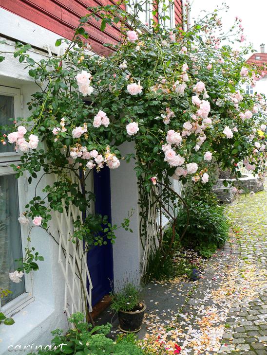 Il pleut des roses ... / Es regnet Rosen ...
