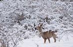 Il principe della neve .....