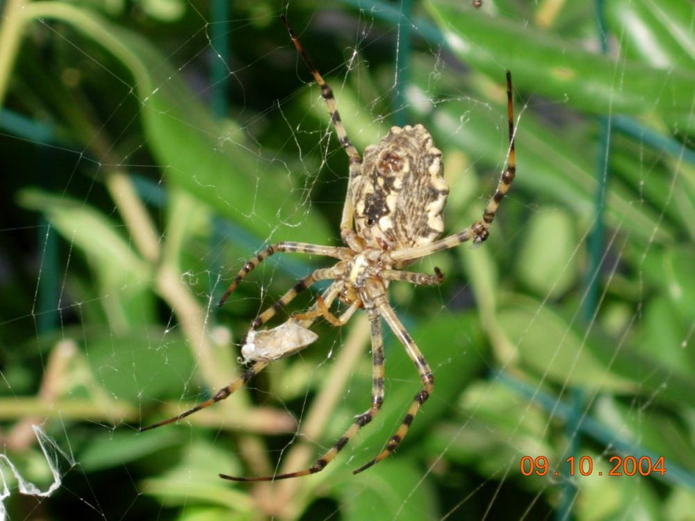 il ragno 2