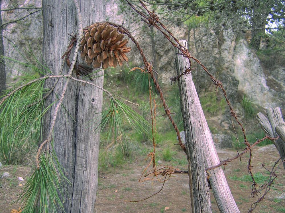 il ramo spezzato