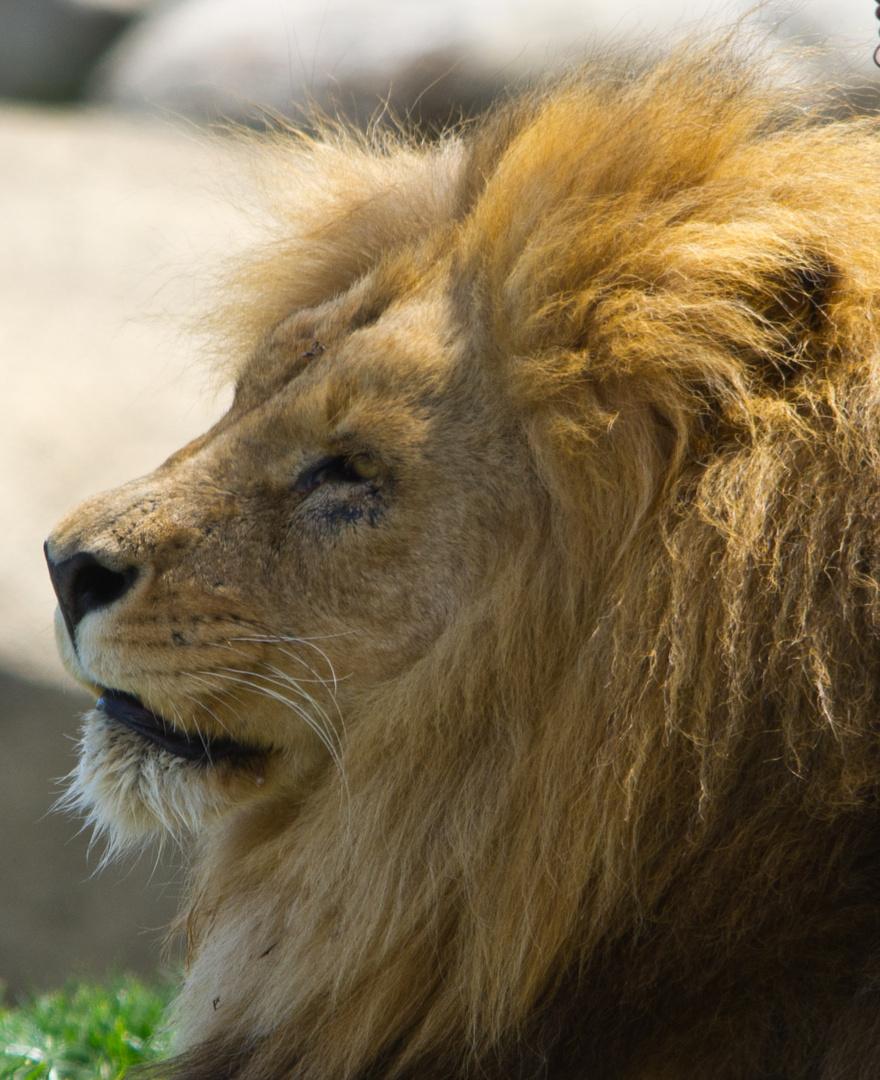 Il Re...