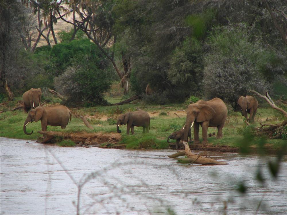 Il rinfresco degli elefanti (Samburu NP - Kenya)