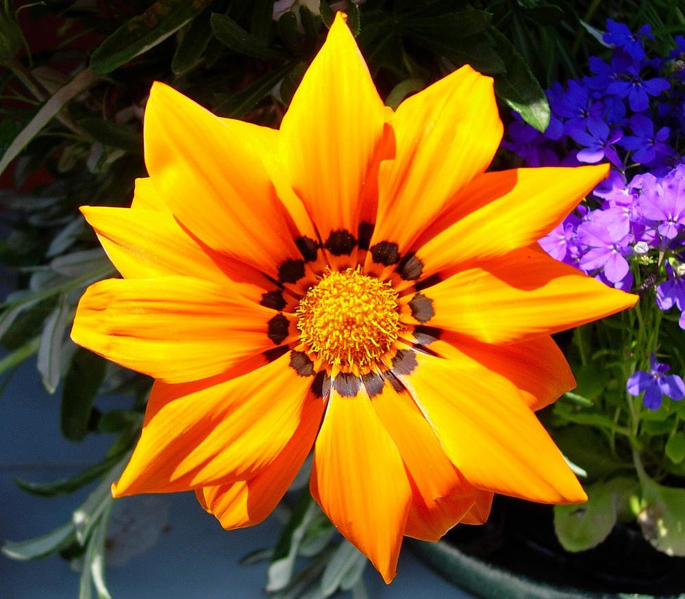 il sole in giardino
