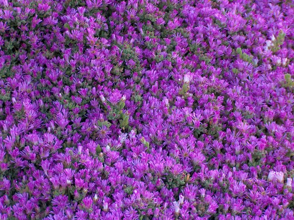 Il tappeto fiorito