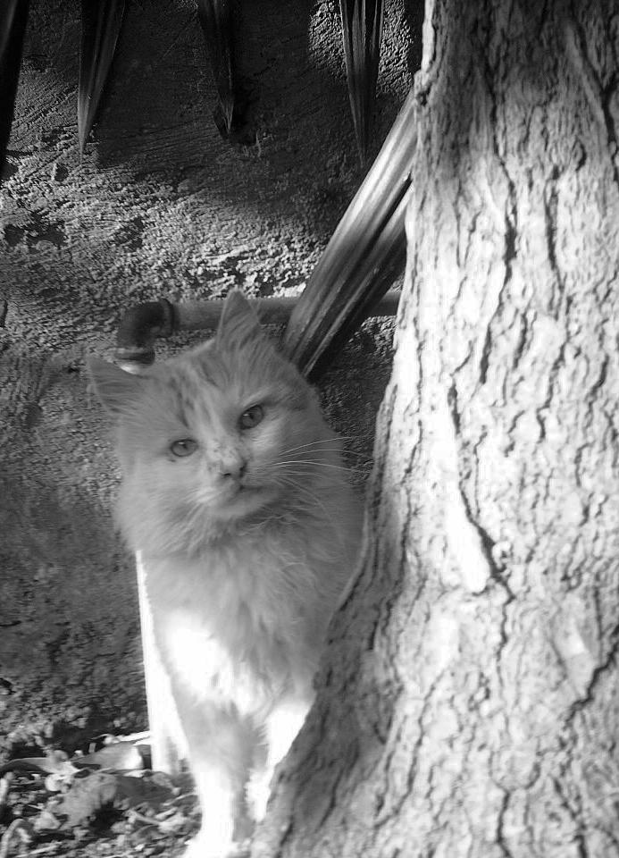 Il te regarde ... Le chat