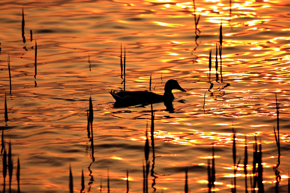 Il tramonto vissuto dalla natura #2