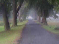 Il viale