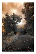 Il viale del tramonto