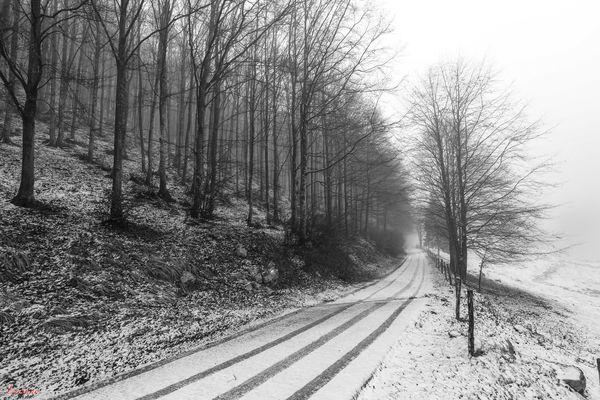 il viale nel bosco
