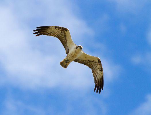 il volo della libertà